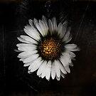 Fleur d'automne by Marie Moriscot