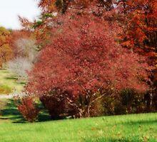 Autumn Trees by Sandy Keeton