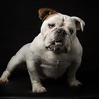 Babe the Bulldog by Mark Cooper