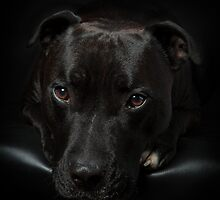 Alfie my Boy by Mark Cooper