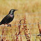 tinsel bird by NordicBlackbird