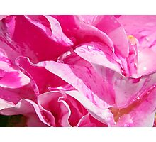Strawberry Rose Photographic Print