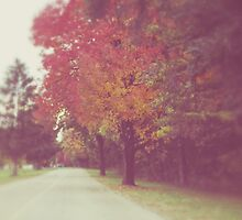 an autumn drive by beverlylefevre