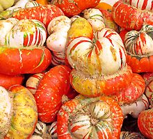 Turban Squash © by Ethna Gillespie