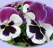 Togetherness - Rose Wing Pansies by MidnightMelody