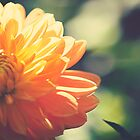 Dahlia by Sue-ann Tilby Photography
