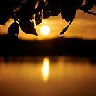 On Golden Pond by joche