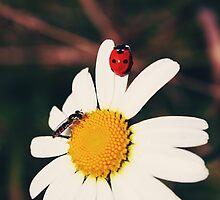 Ladybugs and daisies 2 - Byåsen, Trondheim by Silje Schanche