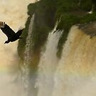 the black vulture by jon  daly