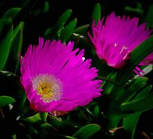 Pigface. by Bette Devine