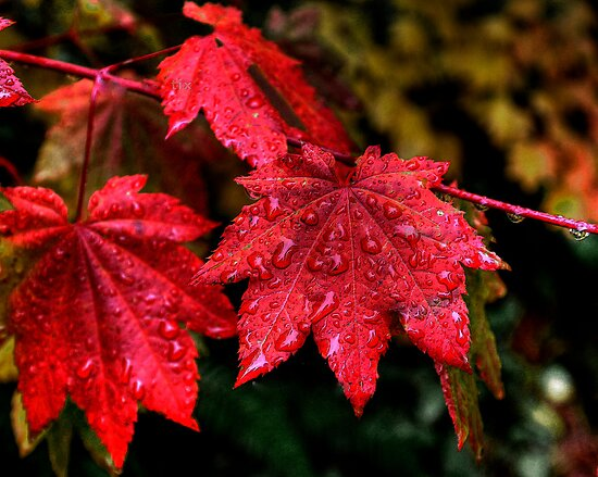 Sometimes I Wear Red by Charles & Patricia   Harkins ~ Picture Oregon