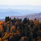 Smoky Mountain Autumn by dlhedberg