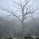 Prehistoric Tree - Mt Wilson NSW Australia by Bev Woodman