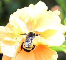 Bee! by keenyahelle