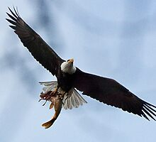 Meal Delivery,  Bald Eagle, Jordan Lake, NC by Denise Worden