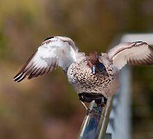 Balancing Act by Steve Randall