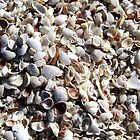 Captiva Island Shells by Patricia127