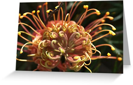 Shapes Of Grevillea by Joy Watson