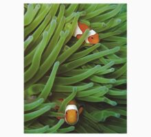 Clownfish in green by Dr Andy Lewis