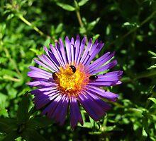 Tweedle Beetles by MarianBendeth
