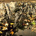 Fall In A Puddle by Maria  Gonzalez
