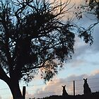 Kangaroos in Silouette, under the Gum tree - Whittlesea, Victoria by Heather Samsa