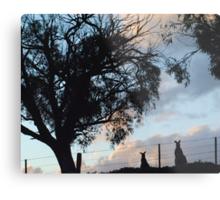 Kangaroos in Silouette, under the Gum tree - Whittlesea, Victoria Metal Print