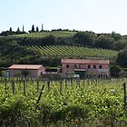 Vineyards on Elba by Christine Oakley