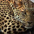 Leopard near Stanleys Camp, Botswana by Neville Jones