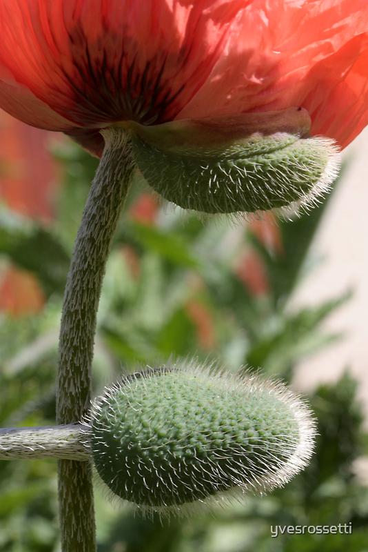 two halves, one half, bloom! by yvesrossetti