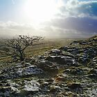 Tree at Malham in winter by SteveFinch