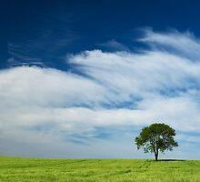 Single Tree by jnmayer