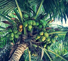 Tropical Green Coconuts by tropicalsamuelv
