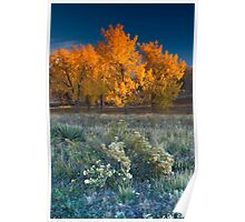First Light Of Fall Poster