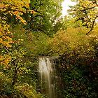 Autumn At Upper Terrace by Nick Boren