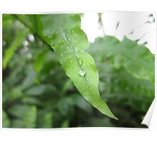Leaf With Water Droplets Poster