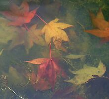 Leaves Underwater Banner by Sue Robinson
