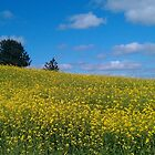 Yellow field by Desaster