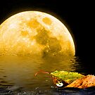 Autumn Moon by Morag Bates