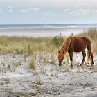 Pony On The Beach by Monte Morton