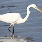 Wading Egret by knelliec