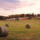 Echunga Road, Echunga, South Australia by Michael Humphrys