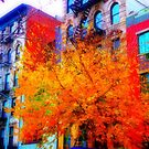 a tree grows in Manhattan by ShellyKay