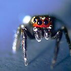 Big scary spider (not) by Graeme Mockler