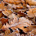 Frosty Autumn leaves by craftybadger