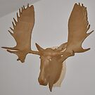 Moose Cardboard by Martin Gyger