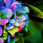 *Hydrangea Watercolor* by DeeZ (D L Honeycutt)