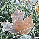 Natural Frost by Kathie Smith