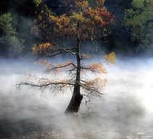 In The Autumn Mist by Carolyn  Fletcher
