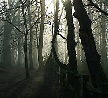 Eery Woodland in Surrey by photosbymo